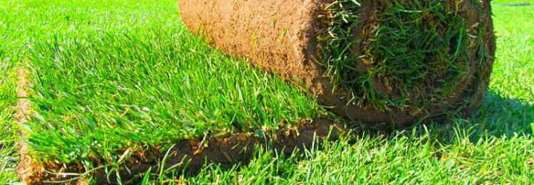 Рулонный газон в Леруа Мерлен